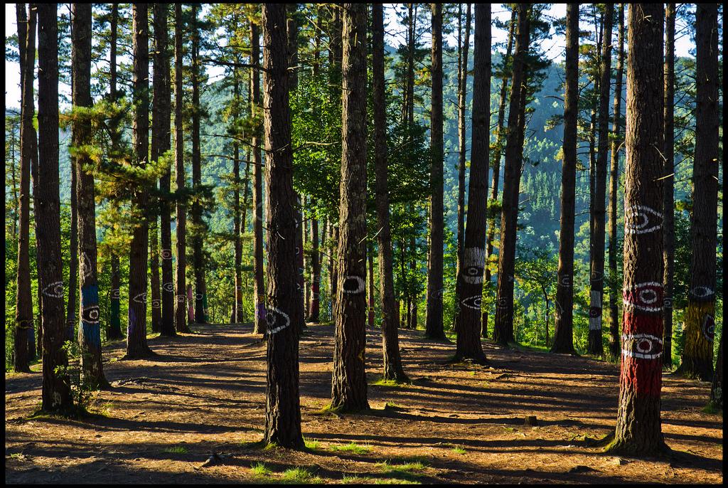 ¿Cuánto gana un ingeniero forestal en Chile?