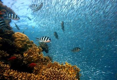 ¿Dónde estudiar ingeniería en acuicultura?