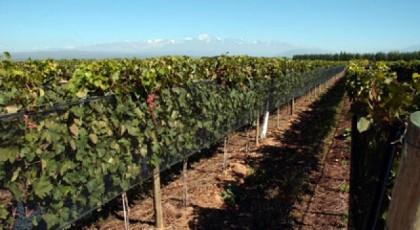 ¿Dónde estudiar vitivinicultura en Chile?
