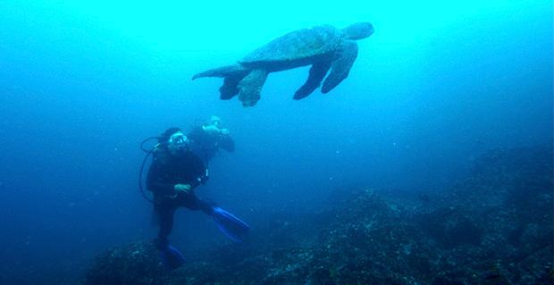 ¿Cuánto gana un biólogo marino en Chile?