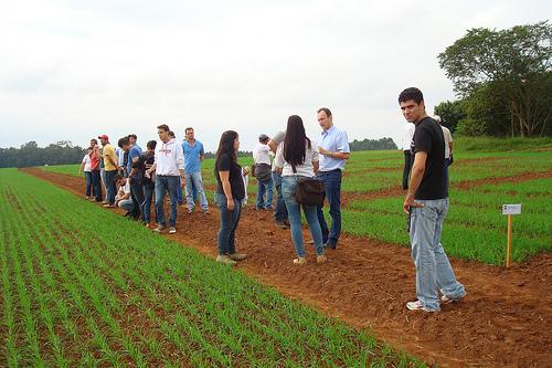 estudiar agronomia